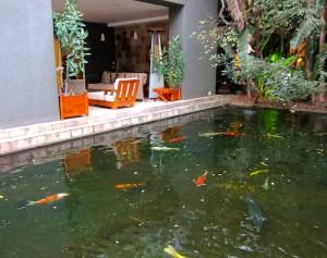 Koi Pond at Saxon Hotel