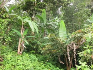 Huatulco wet-season vegetation by Susan Manlin Katzman