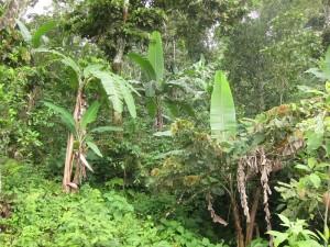 Huatulco wet-season vegetation by Susan Manlin Katzman