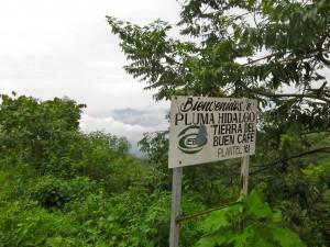 Pluma Hidalgo By Susan Manlin Katzman