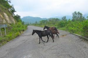 Road to Huatulco  by Susan Manlin Katzman