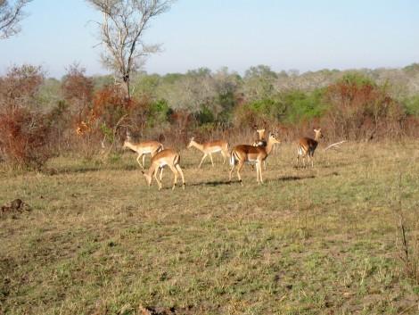 Animals at Sabi Sabi