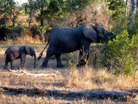 Elephant Family by Susan Manlin Katzman