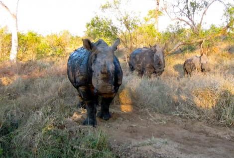 Abundant Animal Sightings at Saba Sabi by Susan Manlin Katzman