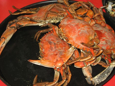 Crab by Susan Manlin Katzman