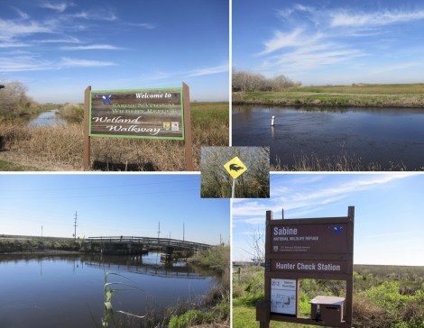 Southwest Louisianna Nature Collage by Susan Manlin Katzman