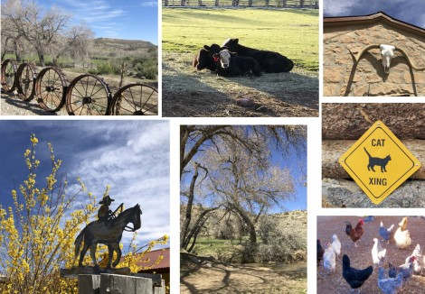 Canyon of the Ancients Guest Ranch Collage by Susan Manlin Katzman