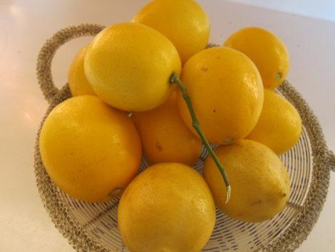 A basket of lemons.